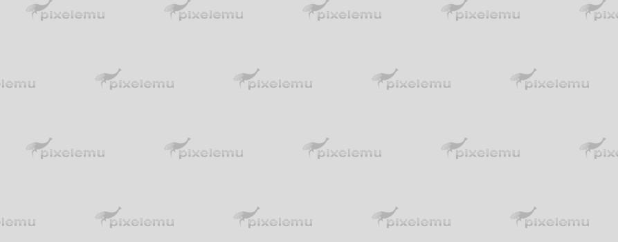 Quisque turpis nibh